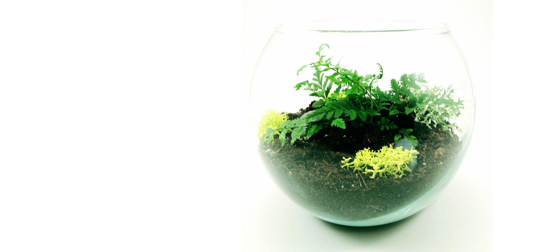 A glass ball terrarium