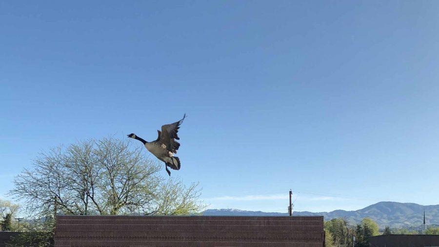 Edgar flies